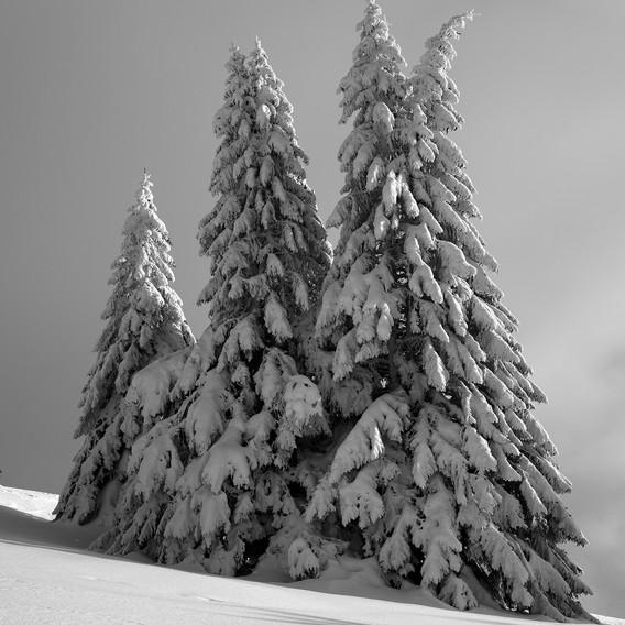 ZIG-SNOW2-018.jpg