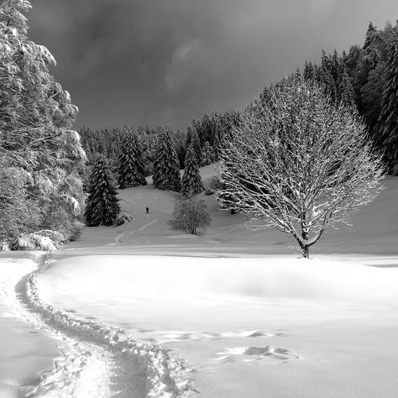 ZIG-SNOW2-009.jpg