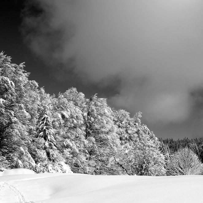 ZIG-SNOW2-004.jpg