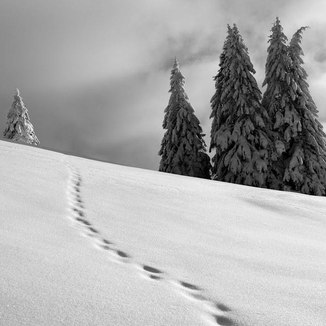 ZIG-SNOW2-012.jpg