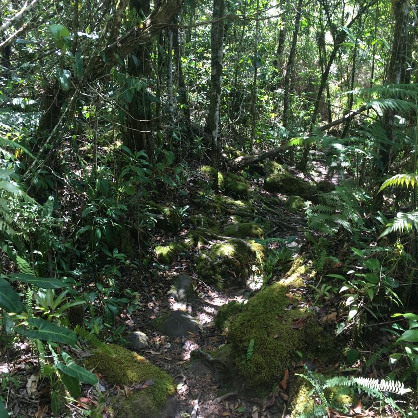 Morro do Castelo trail