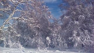 Зимняя сказка.jpg