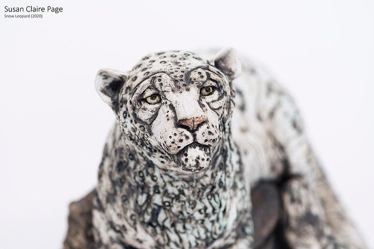 Snow Leopard (2).jpg