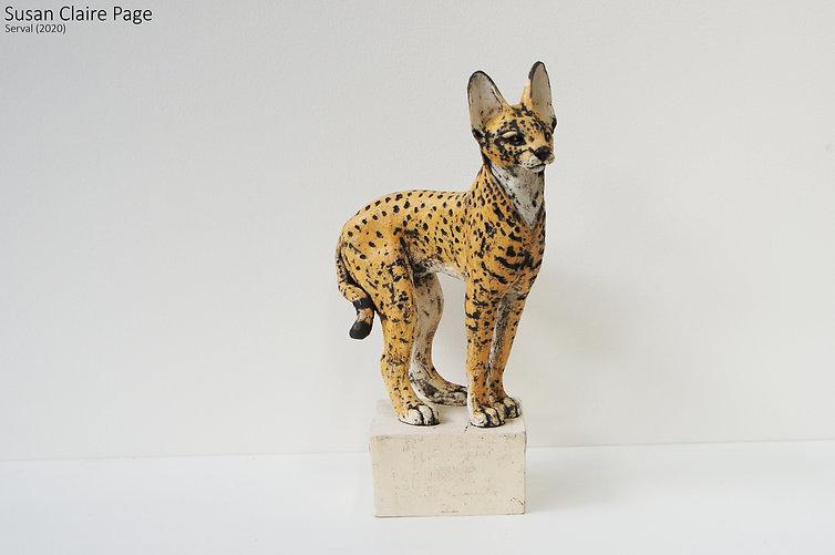 Serval on Box.jpg