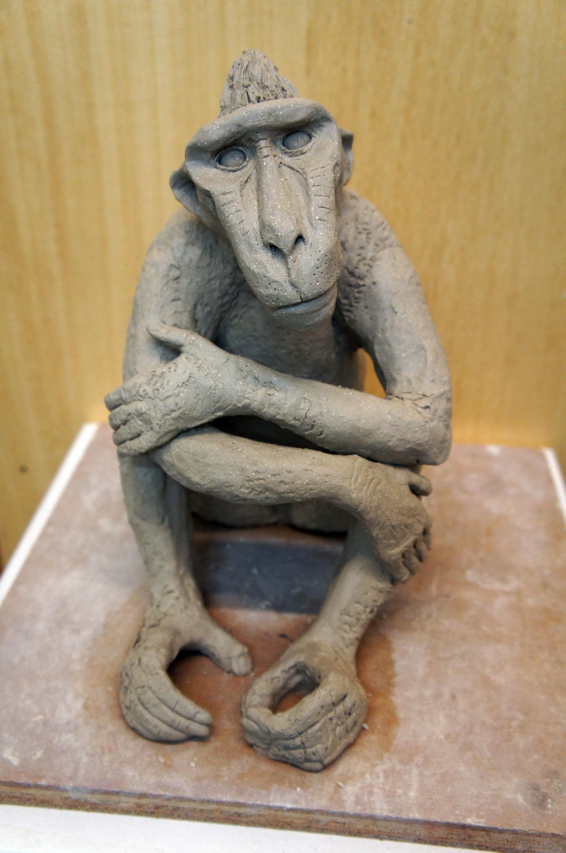 Sulawesi Macaque
