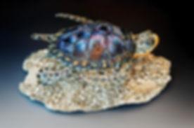 turtle collab .jpg