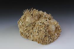 Coral Wall Decor