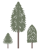 illustration sapins fond transparent - P
