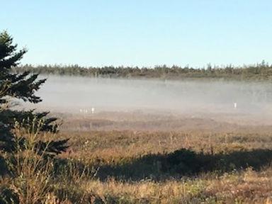 Bog Early am mist #2.jpg