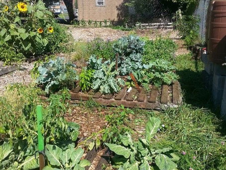 Community Food Systems in the Time of COVID-19: Interviews & a Framework for Personal Action