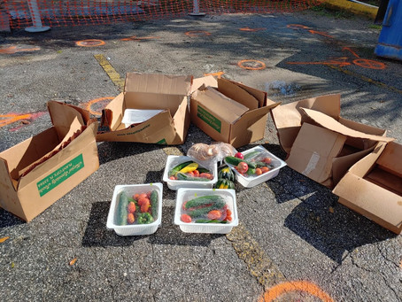 Food Dumping in a Food Desert: Irony in Florida's Tomato Capitol