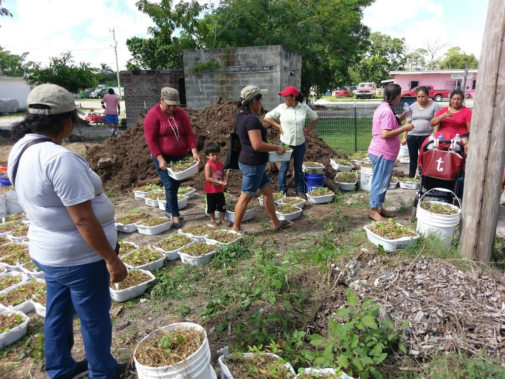Blog   Food Solidarity   Cultivate Abundance