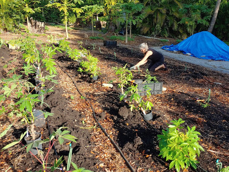 Gardening Lessons and So Much More Learned in 2020