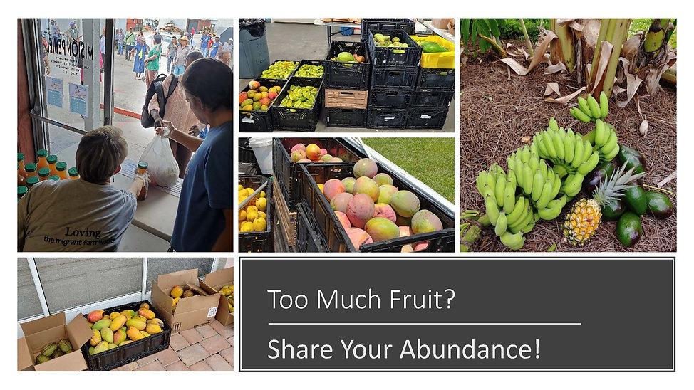 Too Much Fruit.jpg