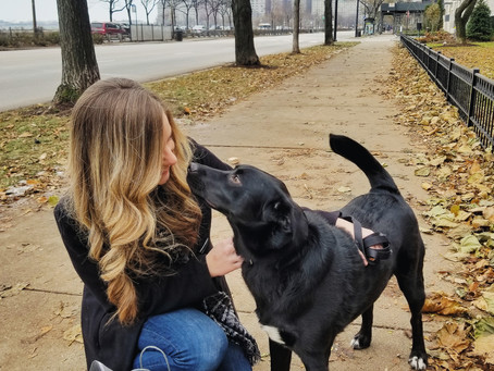 Dog Friendly Stores You Can Bring Your Best Friend With You Into