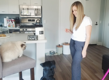 5 Must Haves for a Pet-Friendly Apartment