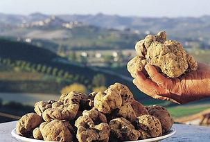 Caza dela trufa - Tours gourmet gastronómicos en el Piamonte, Italia - Liudmila, guía turística oficial en Italia, excursiones - es.italtour.org