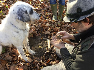 Truffle hunting in Piedmont - Guide in Turin Liudmila, excursions - en.italtour.org