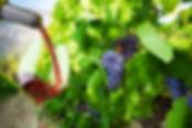 Гид в Турине Людмила, экскурсии - Винные туры в Ланге, Пьемонте - www.italtour.org