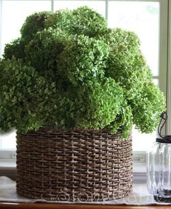 Dried hydrangea green basket.JPG