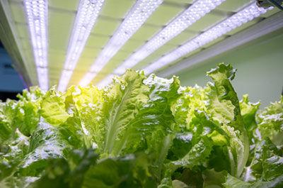 Horticulture Lighting 1.jpg