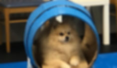 pup in tunnel.jpg