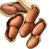 peanut fruit in the shell .jpg