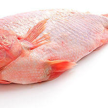 Red tilapia.jpg