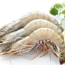Vannamei shrimp2.jpg