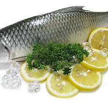 milk fish.jpg