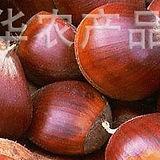 chestnut .jpg