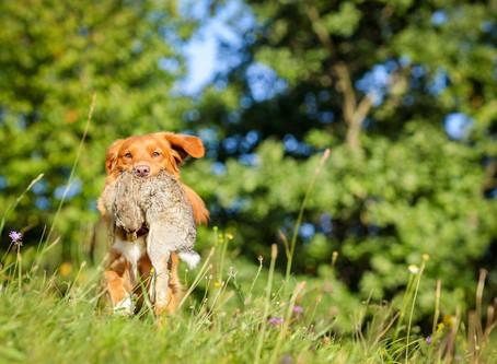 LP-P (hunting trial for retrievers)