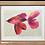 Thumbnail: Affiche poisson pétales