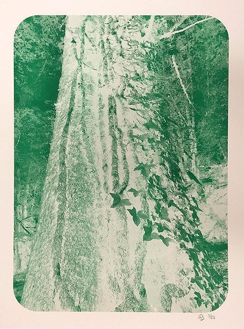 Affiche arbre vert