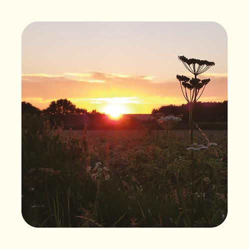 Carte coucher de soleil ombellifère