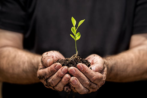 Young plant on soil in a hand of an farm