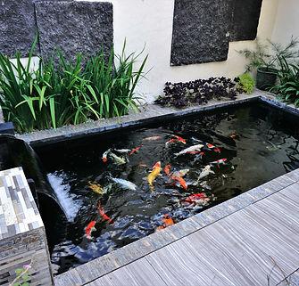 minimalist koi fish pond from top view,