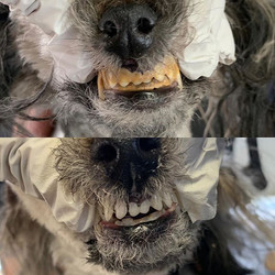 The before and after dental cleaning ! W