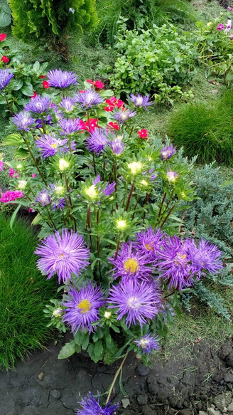 Частный сад со цветником