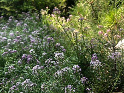 Уютный сад с патио
