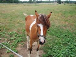 Suki, lovely horse at Farmhouse Near