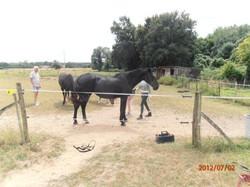 Horse quassine