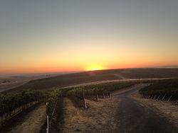 bergevin-lane-vineyards.jpg
