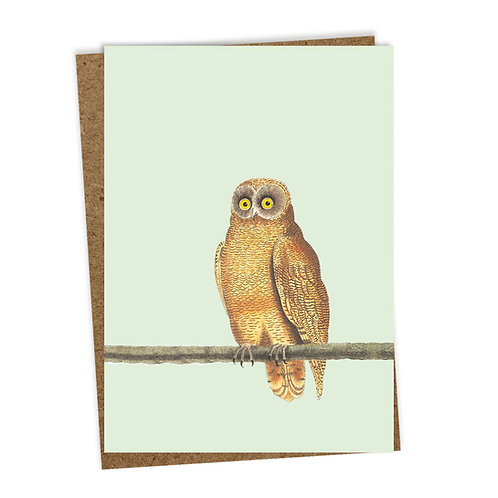 Mellow Owl