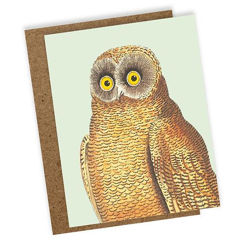Mellow Owl b2b