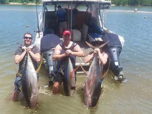 50.5kg Yellowfin