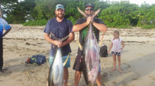 Massive Yellowfin