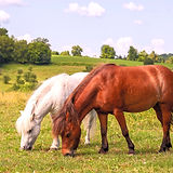 Programs With Horses Helping People Ontario