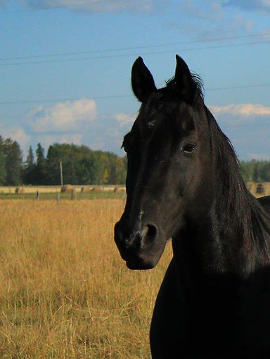 Jett - Spirit Of The Horse - Clearwater County, AB