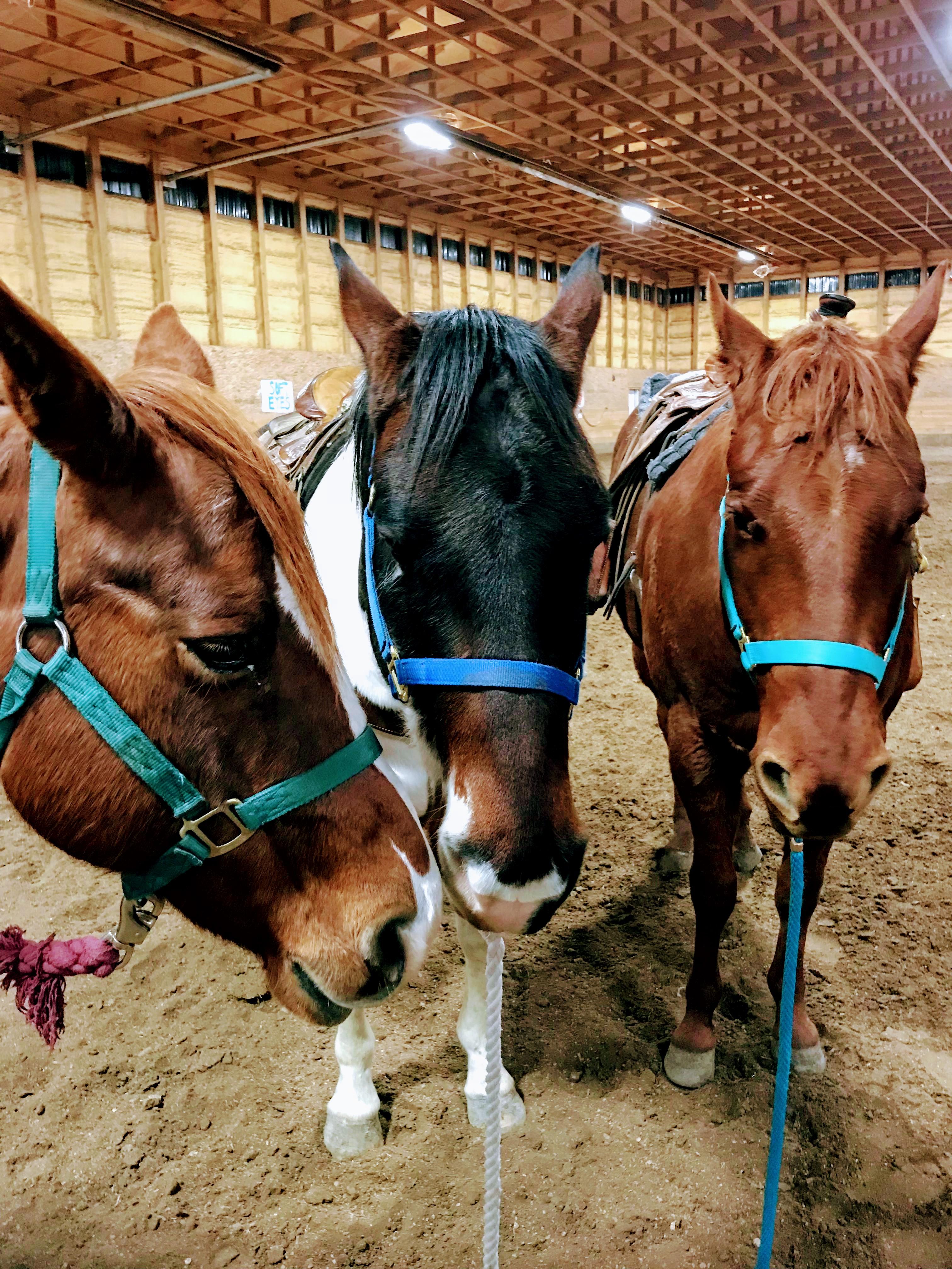 horse activities